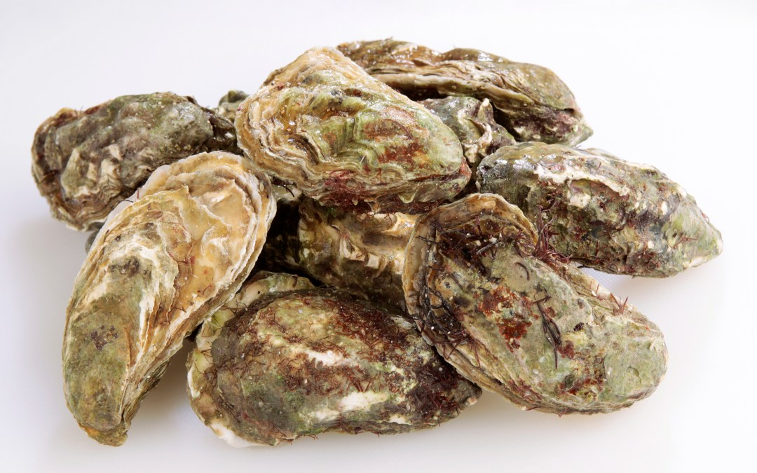 Oysters may help combat pollution in New Jersey waters