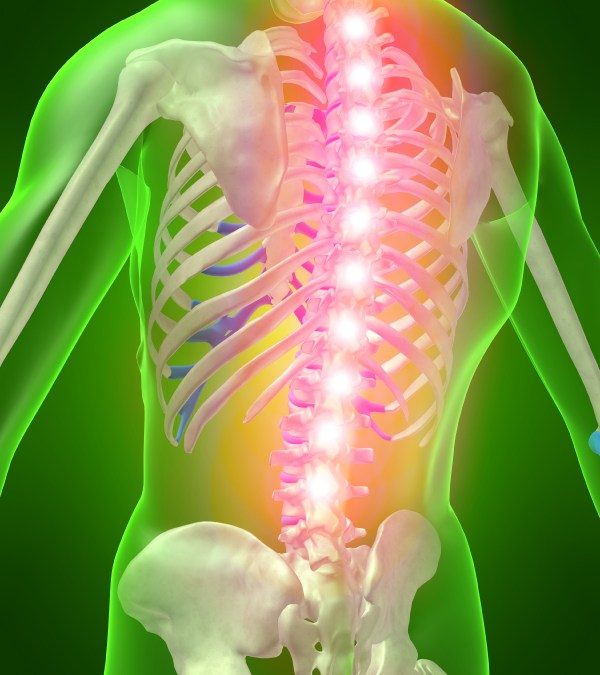 New Hope for Spinal Cord Repair