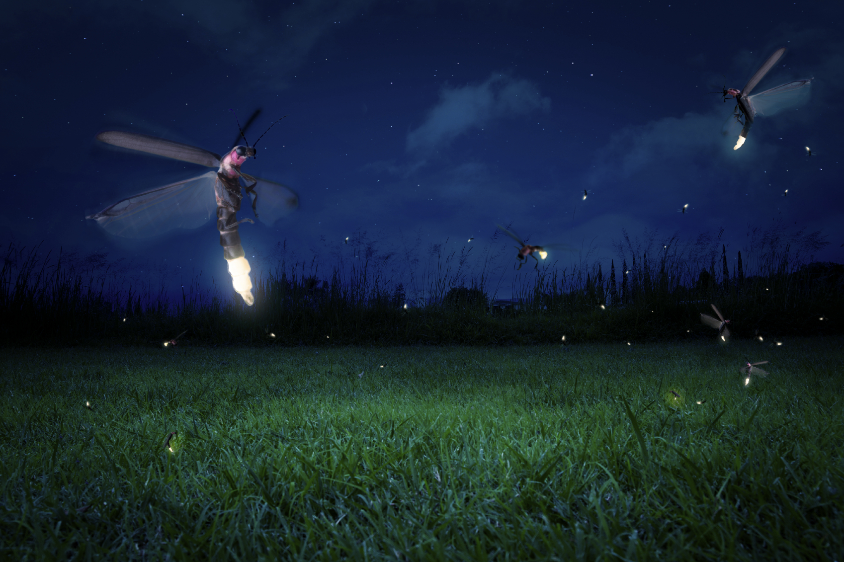 Fireflies The Science Behind The Glow