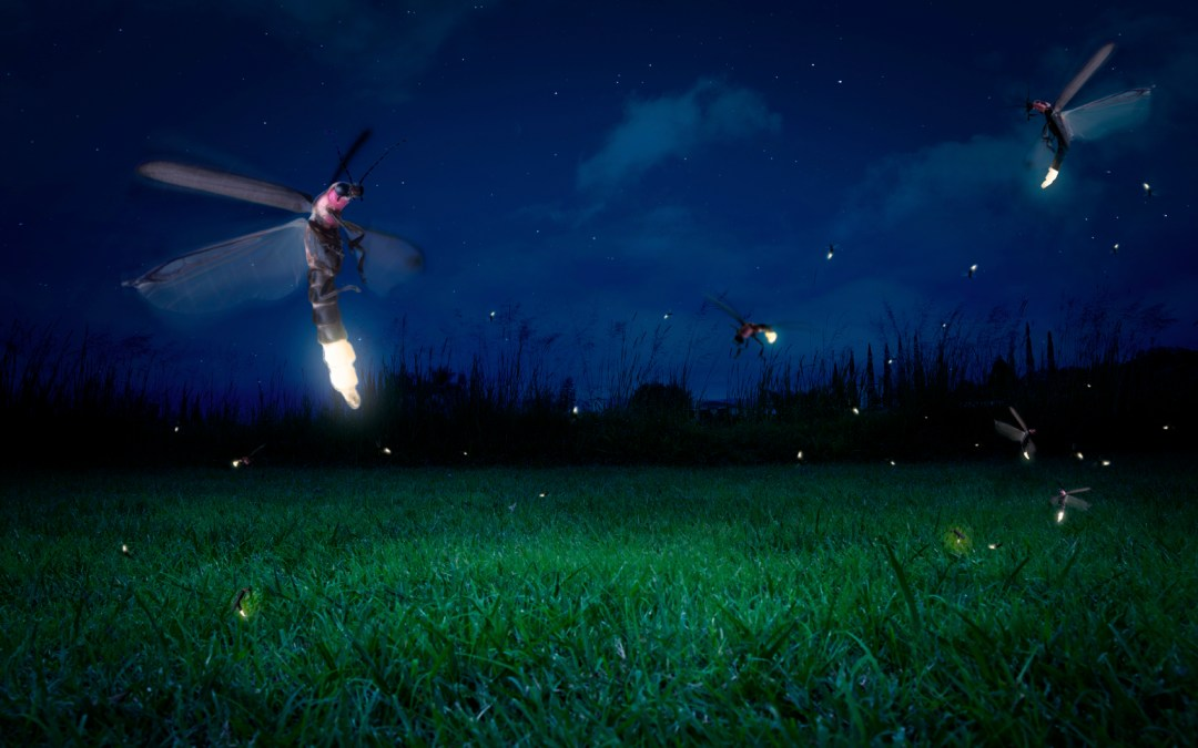 Fireflies: the science behind the glow