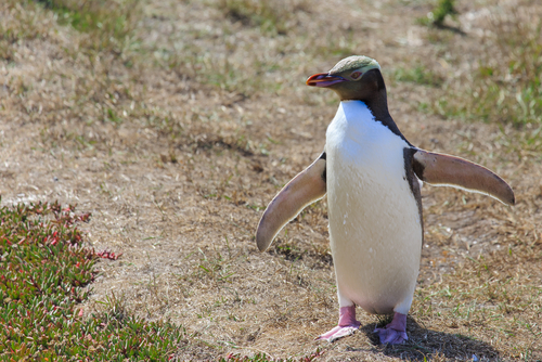 Animal Research helped this Penguin!
