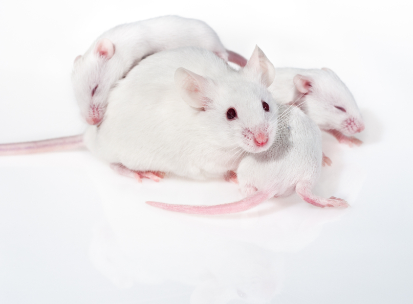 Gene Therapy in Mice Shows Potential For Human Vision Research