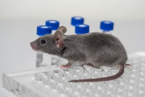 Scientists use humanized mice for coronavirus research. (Photo: Evgenyi_Eg/ Getty Images)