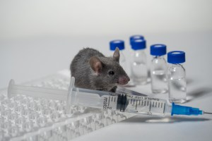 A laboratory mouse is pictured. (Photo: Evgenyi_Eg/ Getty Images)