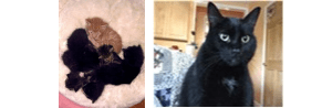 Left: Young Cleo, then known as Spot, cuddles with her siblings Right: Cleo at 10 years old, pre-diagnosis