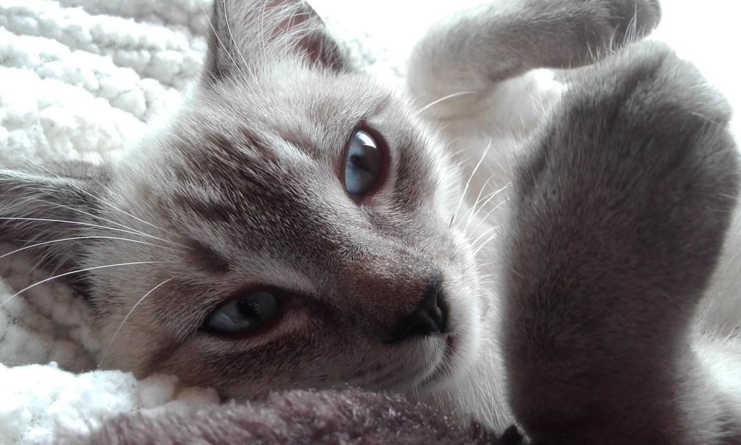 Here is my gorgeous grandcat Bailey. (Photo courtesy of: Alison Richards)