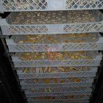 Tabuleiros Com Fruta no meio do processo desidratação - F. Brigido