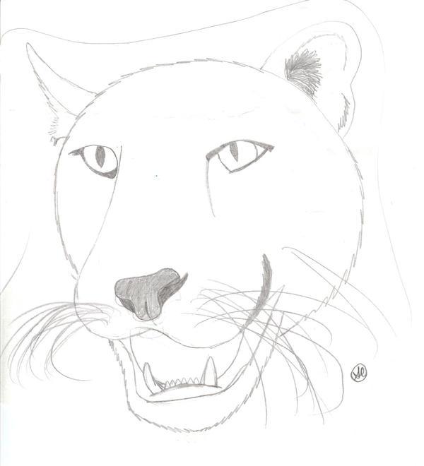 Cougar Head LineArt by jellybean839 on deviantART