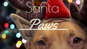 Cuyahoga County Animal Shelter Events Santa Paws