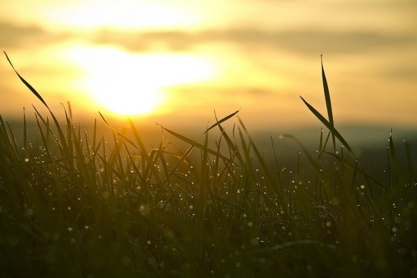 Blades of grass flecked with dew drops are illuminated by the rising sun in the background.