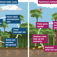 Amazon Rainforest Layers Diagram Porsche 944 Stereo Wiring Nutrient Cycle Of The Tropical –