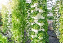 JD enters food production sector with launch of hydroponic farm