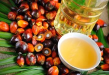 New palm oil standard safeguards workers and forests