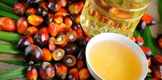 Unilever to accelerate sustainable palm oil production in Indonesia