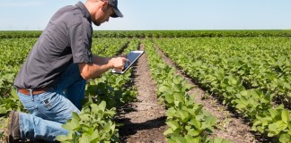 Olam and Google-funded AI specialist to transform agriculture