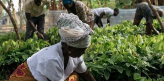 Hershey commits $500m to sustainable cocoa strategy