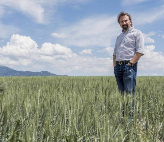 Wheat genome discovery paves way for higher yields, enhanced nutrition