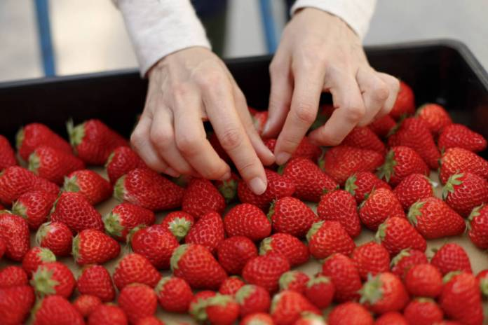 Report highlights more communication post-strawberry tampering