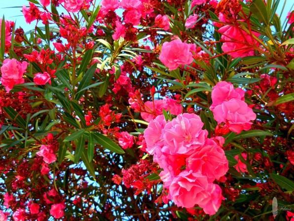 Ibiza bloemen