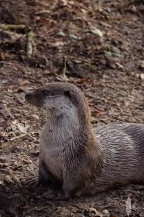 Anholter Schweiz dierenpark