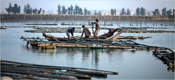 toxic farm in china U.S. Imports Fish From China Raised on Human and Animal Waste