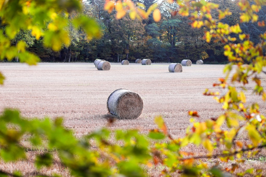 Hay field surrounded by autumn colors