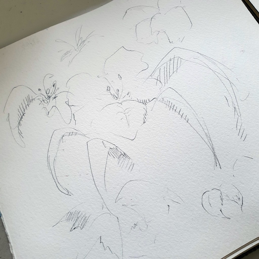 Practice sketches for watercolor daylily painting