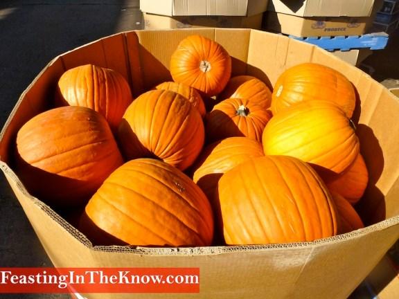 FlemingtonMarketsHalloweenPumpkins