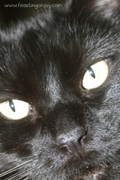 Close Up of Max