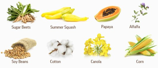 Crops that are GMO