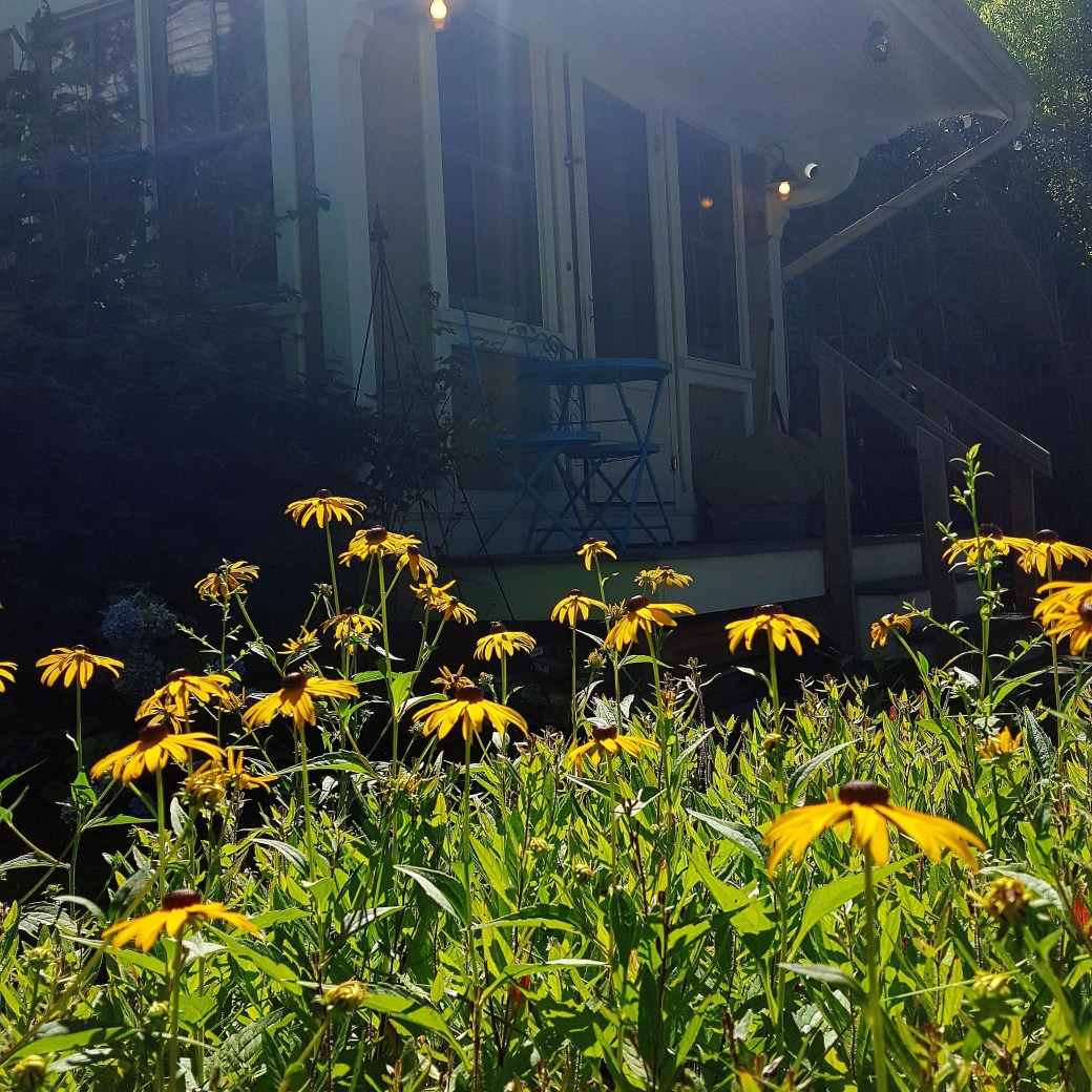 Our cute little rental getaway in Asbury Park, NJ with a view of the backyard through a field of flowers.