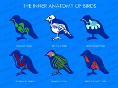 Playing around with ideas for a potential children's encyclopaedia on birds