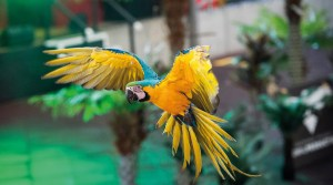 Feathered Friends Macaw