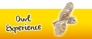 Owl Flight Experience