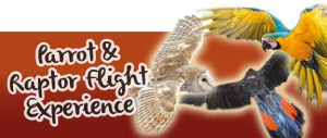 Parrot & Raptor Experience