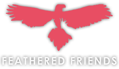 Feathered Friends Animal Productions