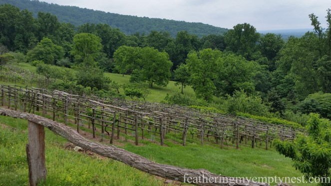 Beautiful view of the vineyards at Monticello--History Geeks' Tour of Monticello