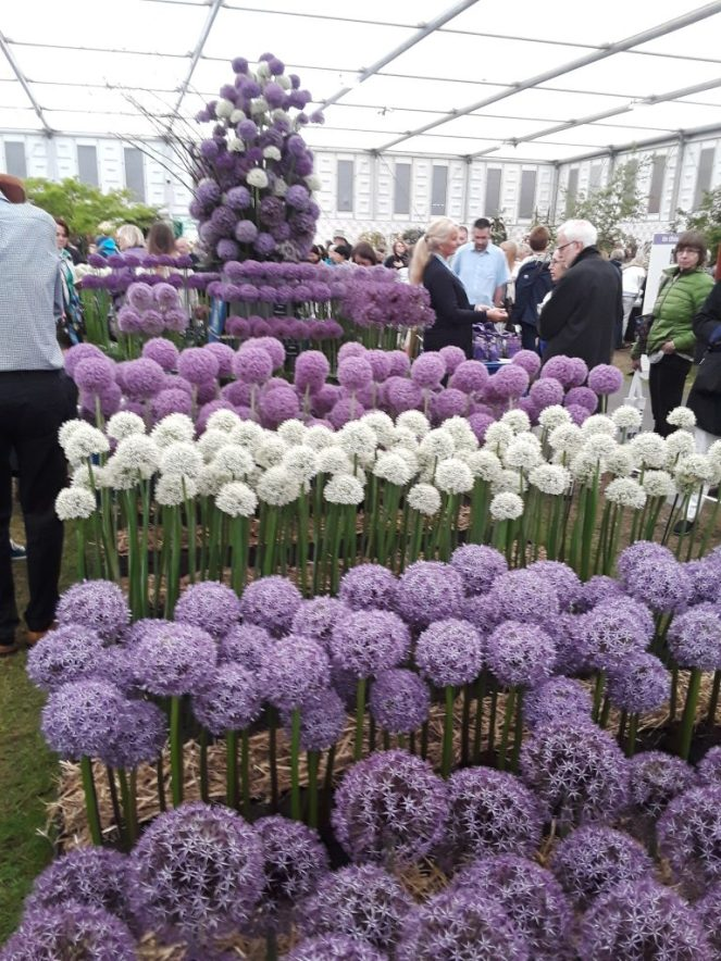 Aisles Of Alliums --Why The Chelsea Flower Show Should Be On Your Bucket List