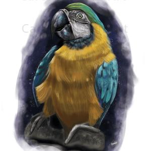 Star Parrot