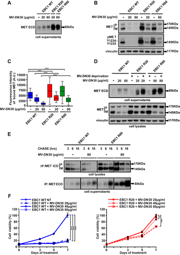 Increase of MET gene copy number confers resistance to a