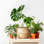Best Indoor House Plants Perfect For Beginners Fed Fit