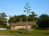 History Center - Agave