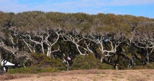 Maritime Forest at Fort Fisher