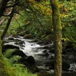 Märchenwald bei Killarney