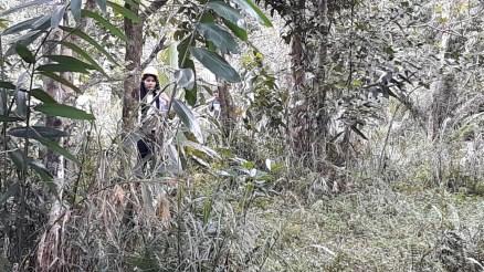 KingNamjoon-reforestation-FEED-9sep201821