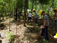 MITIS-Planting-FEED-13041919