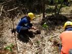 MITIS-Planting-FEED-13041921
