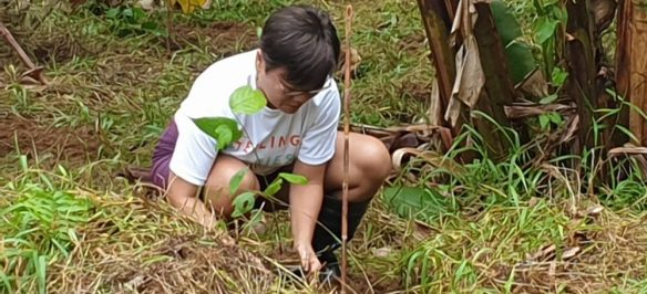 cropped-ecomatcher-feed-ourbetterworld-1000trees33.jpg