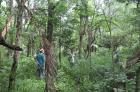 John-Marlon-Magbuo-@LQLG3-TreesMeasurement