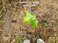 FEED=Odfjell-CSR-Tree-Planting2-31Aug2019-GPS4